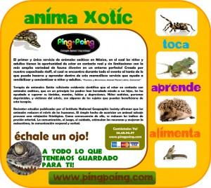 fiestas infantiles mexico fiestas animales exoticos animadores